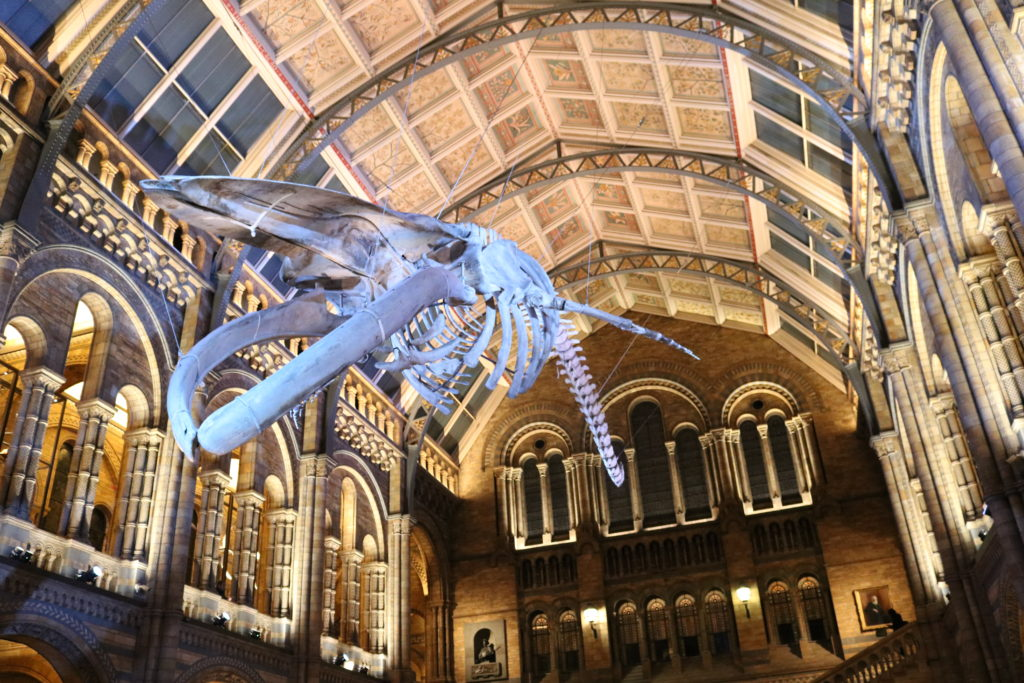 Whale London Natural History Museum